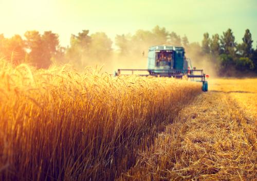 produzione-agroalimentare-Sinloc